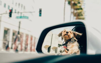 No olvides esto si viajas con tu mascota