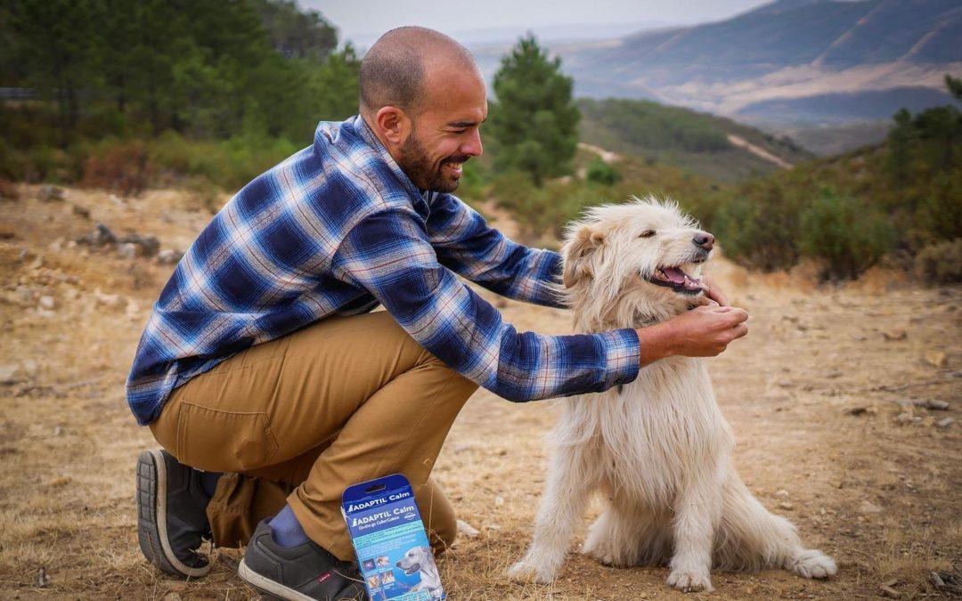 Una forma para disminuir la ansiedad y miedo de tu perro ante los ruidos